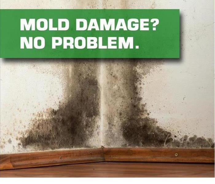 Mold Remediation The truth is..... it's EVERYWHERE!