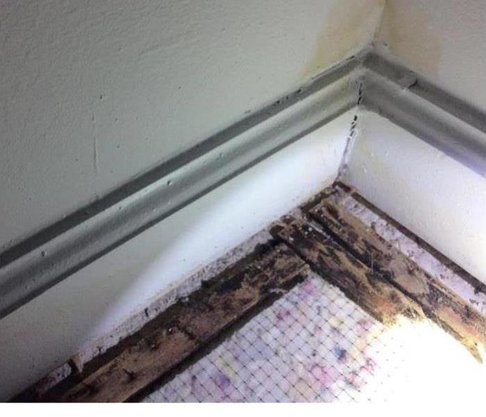 Mold Remediation Winter & Mold - It can happen!