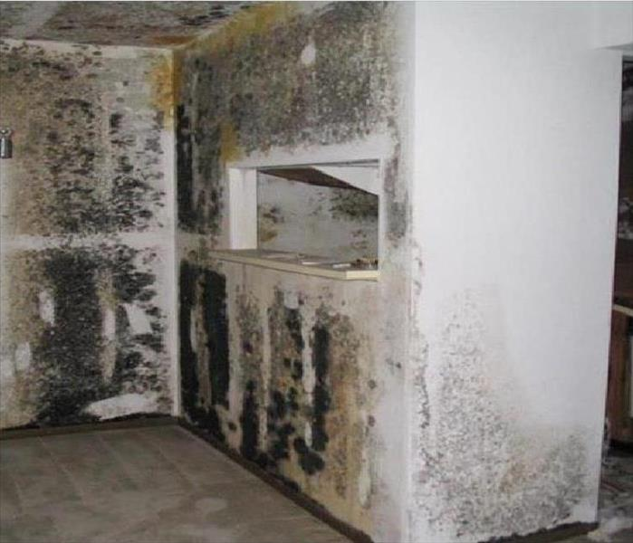 Mold Remediation Mold Comes in Various Colors, Shapes & Sizes