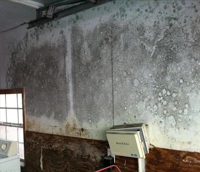Mold Remediation How to keep Mold at Bay in your Columbia or Suwannee County home.